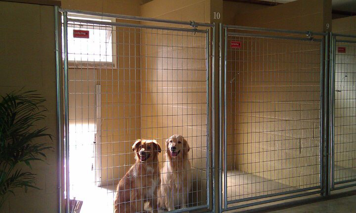 Janesville wi dog boarding kennel